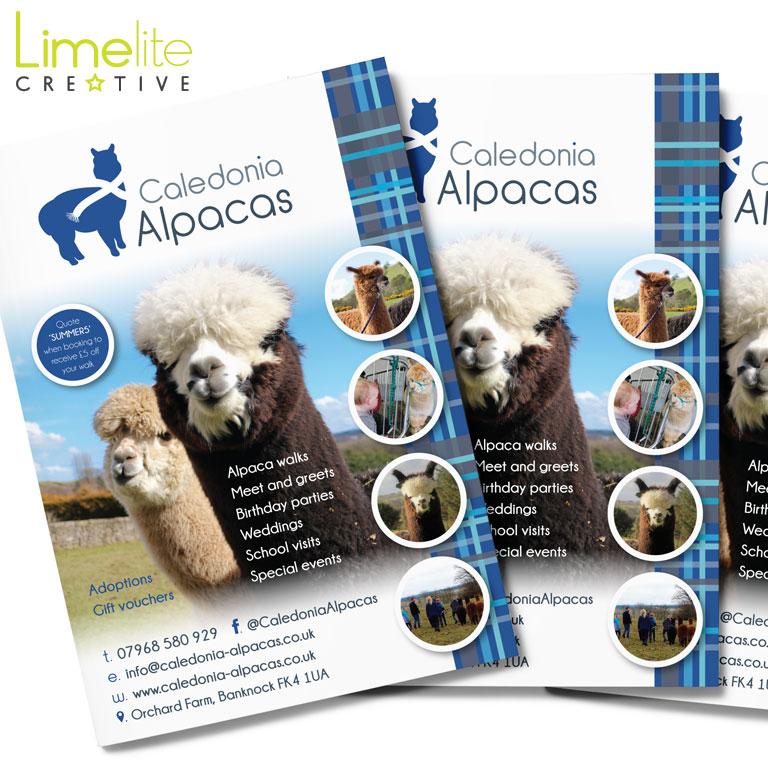 Leaflet Design | Caledonia Alpacas